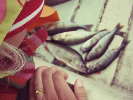 family-fishing-perch-in-finland-5