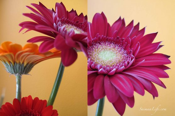 saimaalife-colorful-flowers