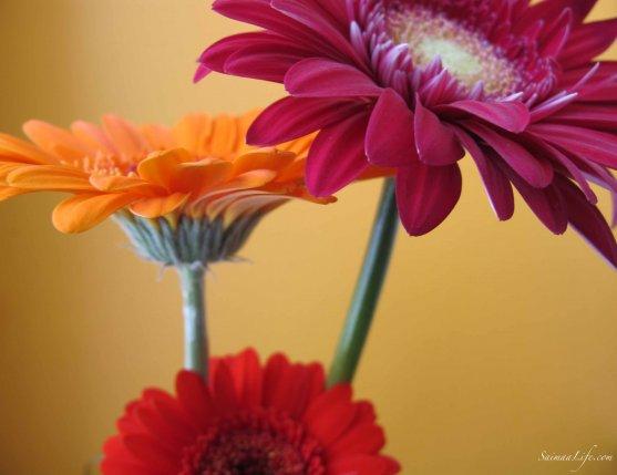 saimaalife-flowers