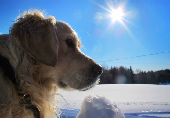 sunny-day-dog