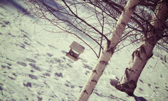 winter-birdhouse