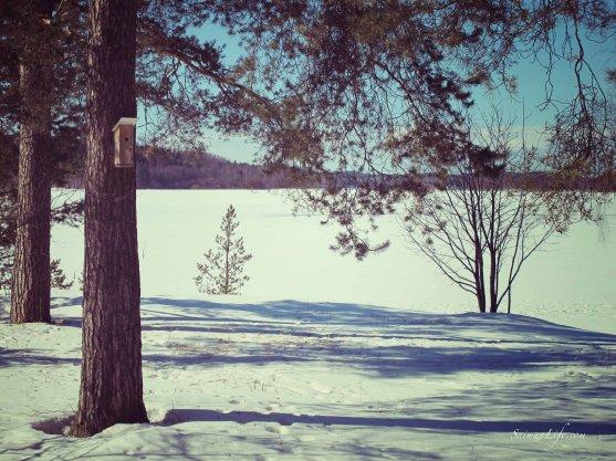 winter-lake-view