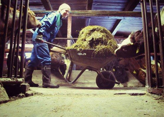 cowhouse-wheelbarrow