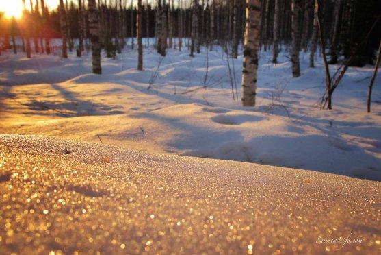 winter-evening-sparkling-snow-cover