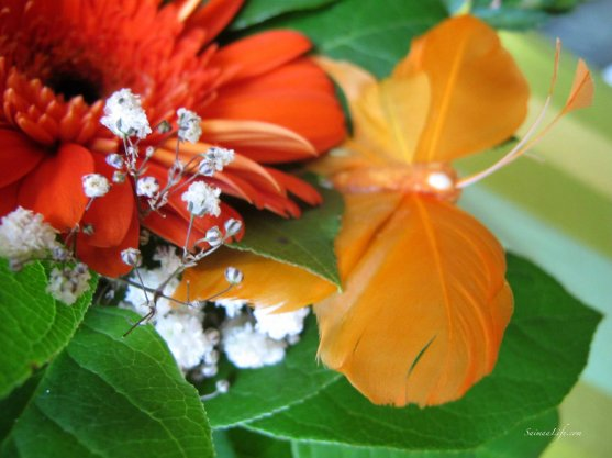 flowers-red-and-orange