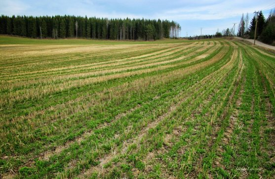 spring-field-finland-in-may