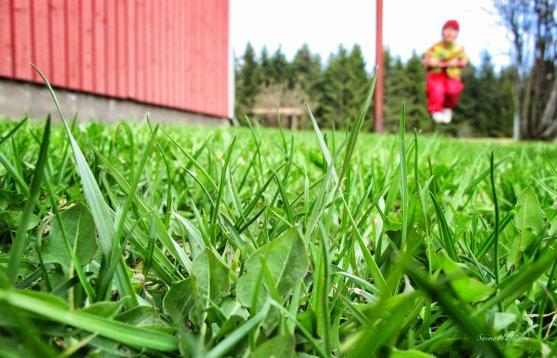 spring-green-lawn