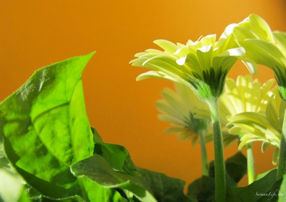 mothers-day-green-leaves-and-flowers