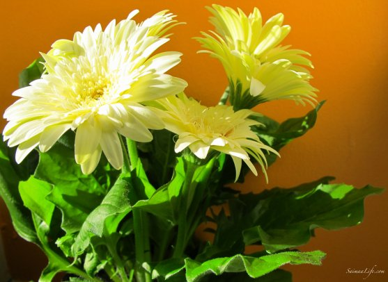 mothers-day-white-flowers