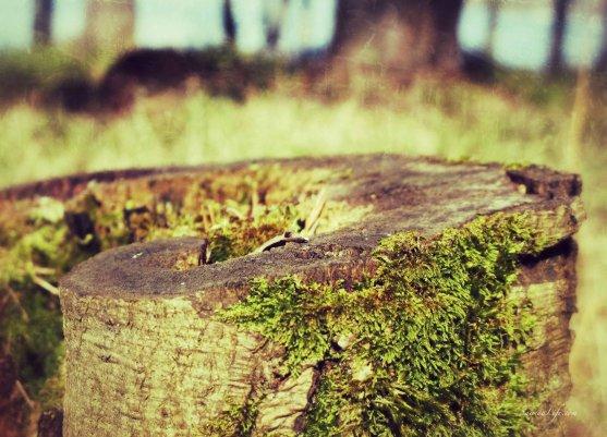 stump-of-a-tree