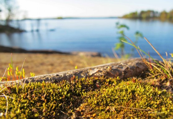 finnish-lake-view