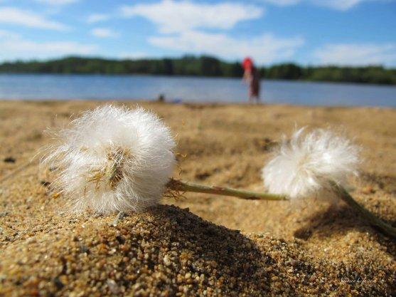 sand-and-lake