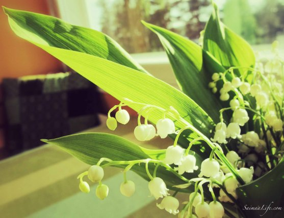 lily-of-the-valley-in-kitchen-table