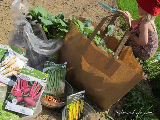 vegetable-garden-2