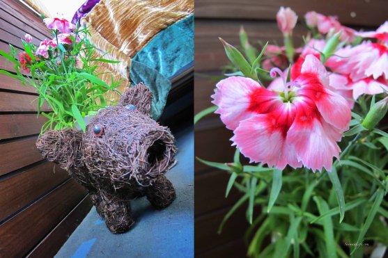 balcony-flowers
