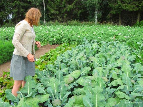 broccoli-and-vegetable-garden