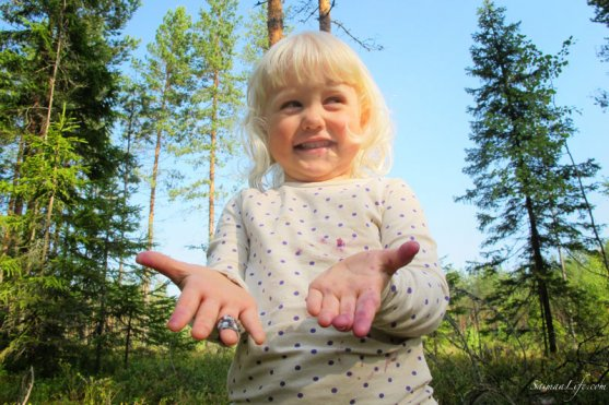 picking-up-blueberries-in-finland-1
