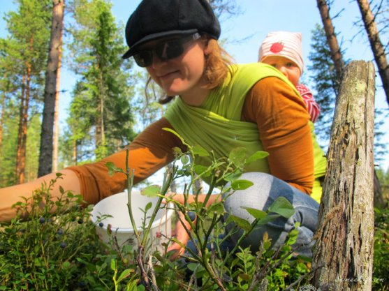 picking-up-blueberries-in-finland-4