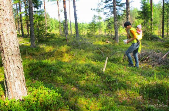 picking-up-blueberries-in-finland-5