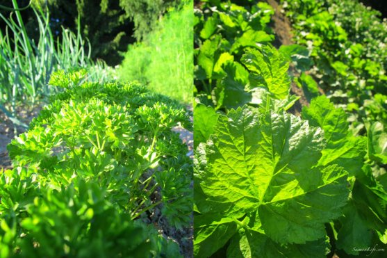 vegetable-garden-1