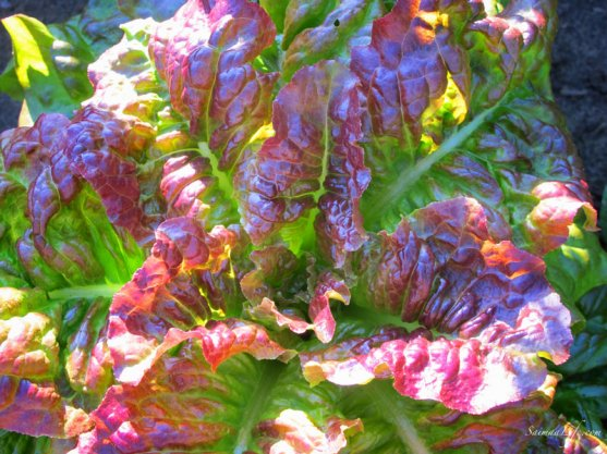 vegetable-garden-6
