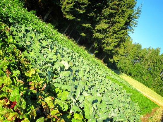 vegetable-garden-8