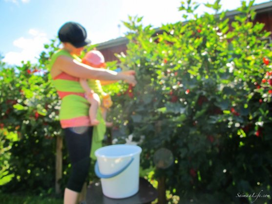 mother-picking-up-red-currants-with-children-1
