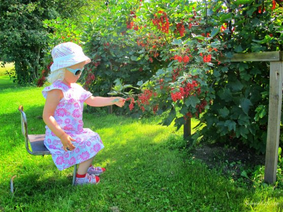 mother-picking-up-red-currants-with-children-2