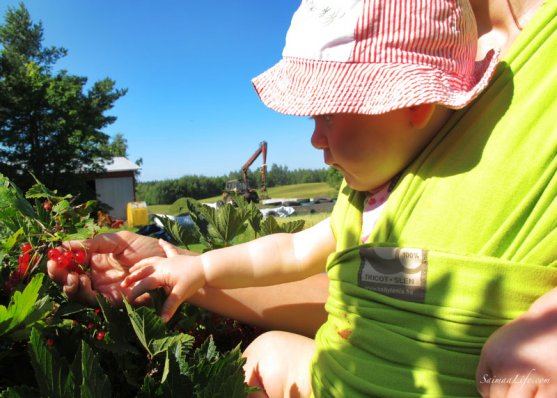 mother-picking-up-red-currants-with-children-5
