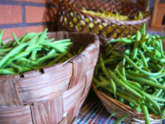 woman-cutting-beans-from-vegetable-garden-1