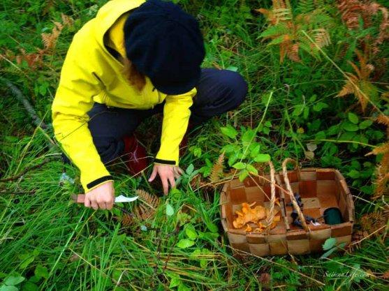 mushroom-trip-in-forest-4