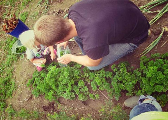 parsley-from-own-vegetable-garden-2