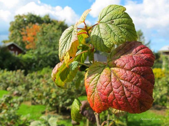 first-signs-of-autumn-2
