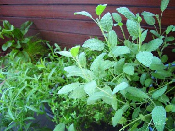 herbs-on-balcony-1
