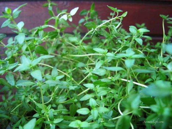 herbs-on-balcony-3