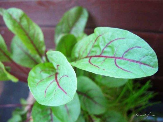 herbs-on-balcony-5