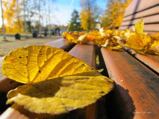 autumn leaves on the park bench