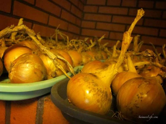 onions-from-own-vegetable-garden-1