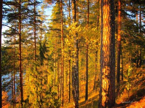 punkaharju-ridge-area-in-finland-in-beautiful-autumn-day-1
