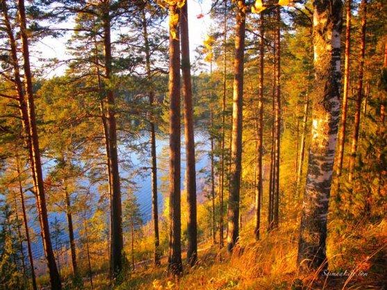 punkaharju-ridge-area-in-finland-in-beautiful-autumn-day-3