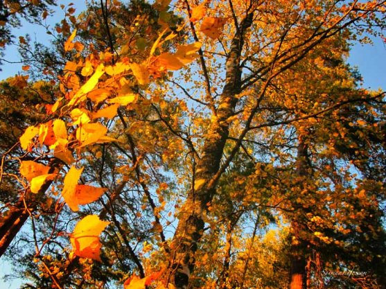 punkaharju-ridge-area-in-finland-in-beautiful-autumn-day-4