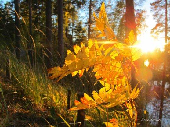 punkaharju-ridge-area-in-finland-in-beautiful-autumn-day-6