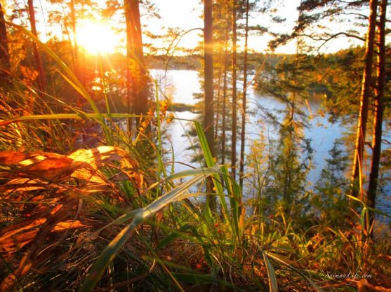 punkaharju-ridge-area-in-finland-in-beautiful-autumn-day-8