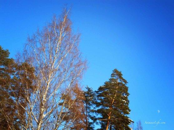 winter-blue-sky