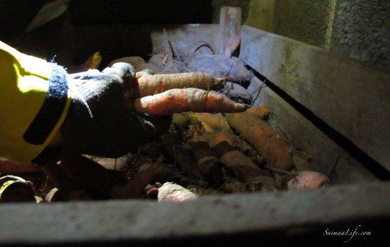 cellar-carrots