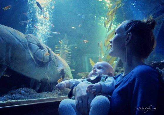 sealife-baby-watching