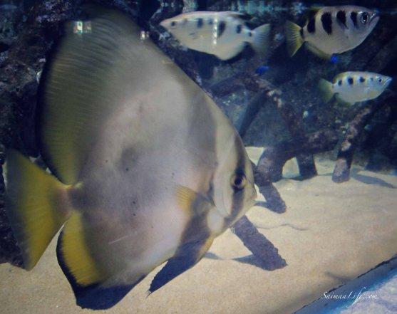 sealife-fish