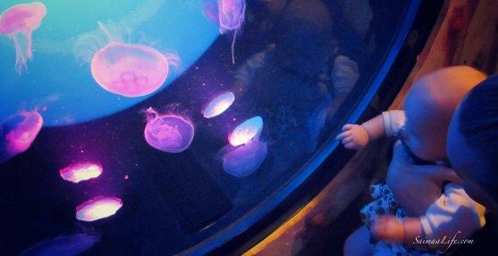 sealife-medusa
