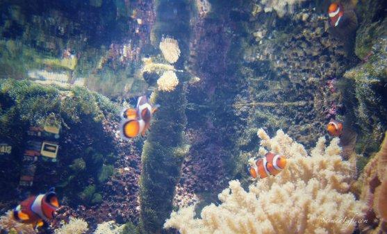 sealife-nemo-fish