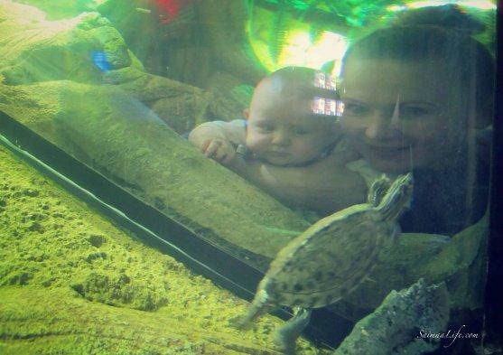 sealife-turtles